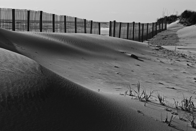 Dunes and Fence II